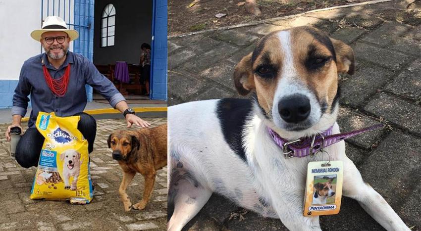 Professor faz doação e cães abandonados recebem crachá e viram guardiões do Memorial Rondon